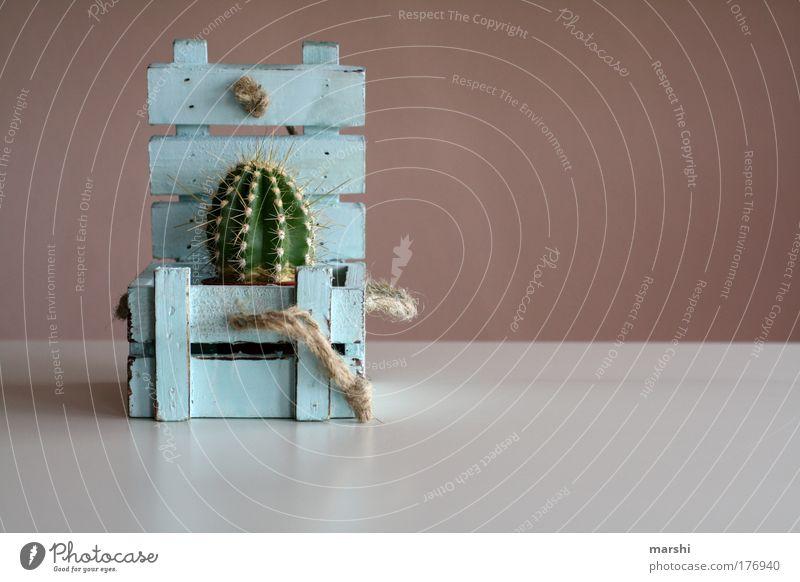 be*stechende* Überraschung Farbfoto Innenaufnahme Textfreiraum rechts Natur Pflanze Kaktus Kasten Holz alt blau grün Truhe Schnur Stachel Geschenk