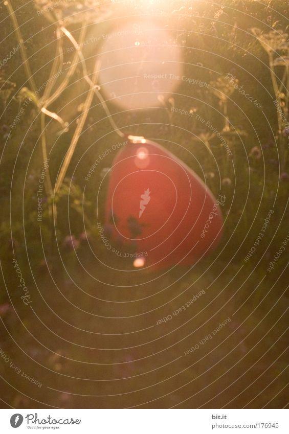 Schauinsland 1284 m. 25° windstill der Ballon hält [FR 15|08|09] rot Sonne Sommer Freude Gras Glück Wärme träumen braun Zufriedenheit Herz außergewöhnlich Sträucher Dekoration & Verzierung Luftballon Romantik