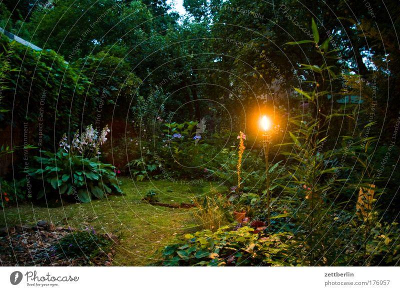 Garten Abend Fackel Flamme Nacht Sommerabend Sommernacht Beet Blume Pflanze Gartenbau Moos schlaflosigkeit Märchen