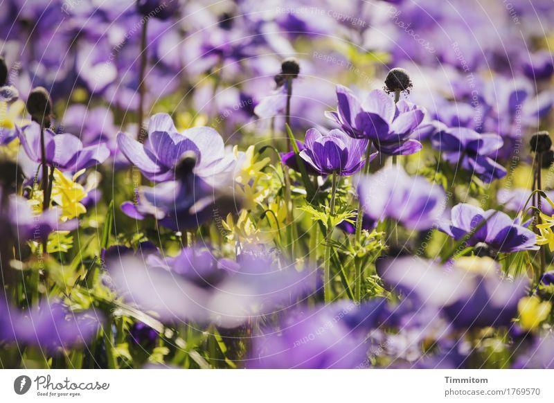 Ein paar Blumen. Natur Pflanze grün Blüte Gefühle natürlich Blühend violett Blumenbeet