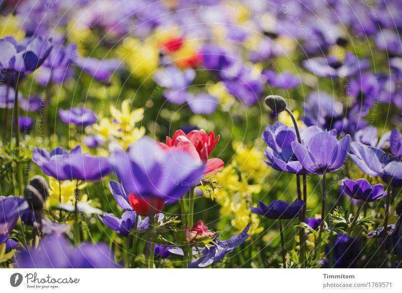 Ein paar Blumen (2). Natur Pflanze Blatt Blüte Blütenknospen Blühend gelb grün violett rot mehrfarbig Farbfoto Außenaufnahme Menschenleer Tag