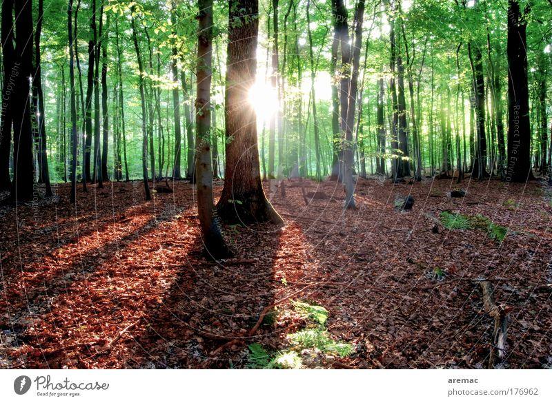 Lichtblick Natur Baum Sonne grün Pflanze rot Sommer ruhig Wald Landschaft Menschenleer Silhouette Sonnenuntergang