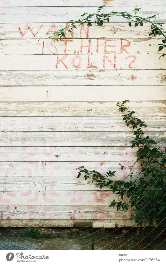 Frage Kunst Kultur Pflanze Mauer Wand Zaun Holz Schriftzeichen Schilder & Markierungen Graffiti authentisch trashig Holzwand Fragen Holzzaun Ranke Farbfoto