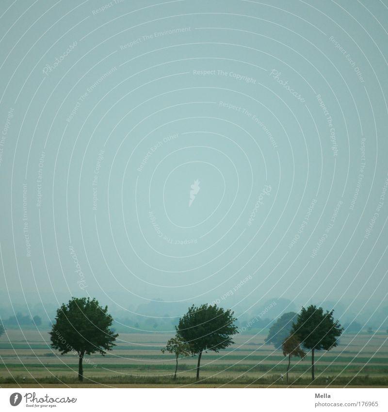 Morgens Natur Himmel Baum Pflanze Sommer ruhig Einsamkeit Ferne Landschaft Stimmung Feld Umwelt einfach Unendlichkeit Idylle Allee