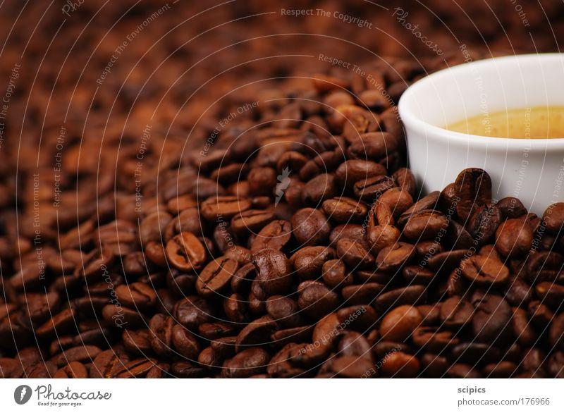 Kaffee Farbfoto Innenaufnahme Studioaufnahme Detailaufnahme Kunstlicht Unschärfe Lebensmittel Ernährung Kaffeetrinken Getränk Heißgetränk Latte Macchiato
