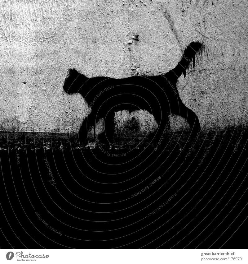 an die wand gemalt Katze weiß Sommer Tier schwarz Umwelt dunkel grau Stein Fassade elegant bedrohlich einzigartig Vergänglichkeit Fell