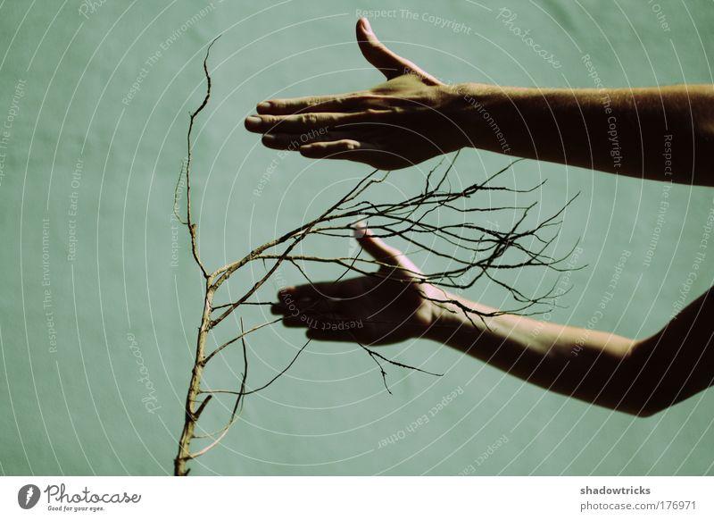 Protection Natur Baum Pflanze Umwelt Holz Klima Sicherheit Sträucher Schutz berühren Vertrauen ökologisch Umweltschutz Geborgenheit Toleranz Wildpflanze