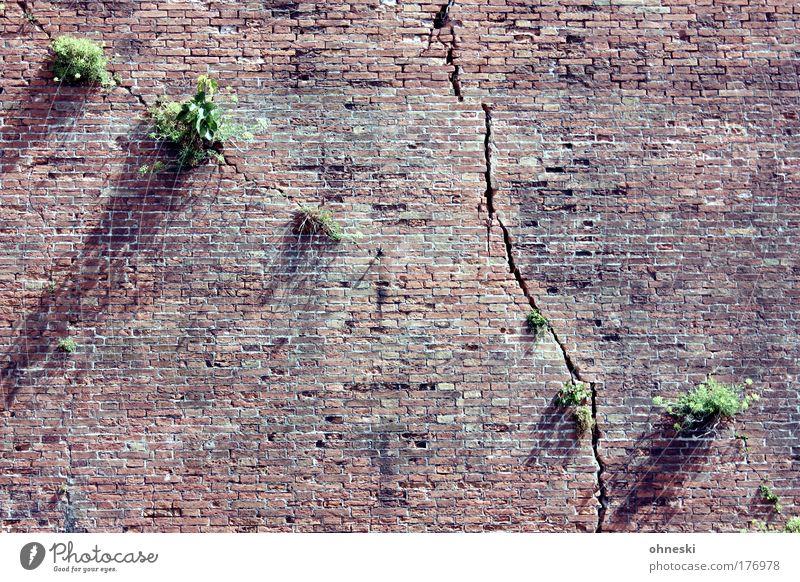 Mauergewächse Natur alt Baum Pflanze Wand Stein Wachstum Bauwerk Italien Backstein Riss Altstadt Toskana abstrakt