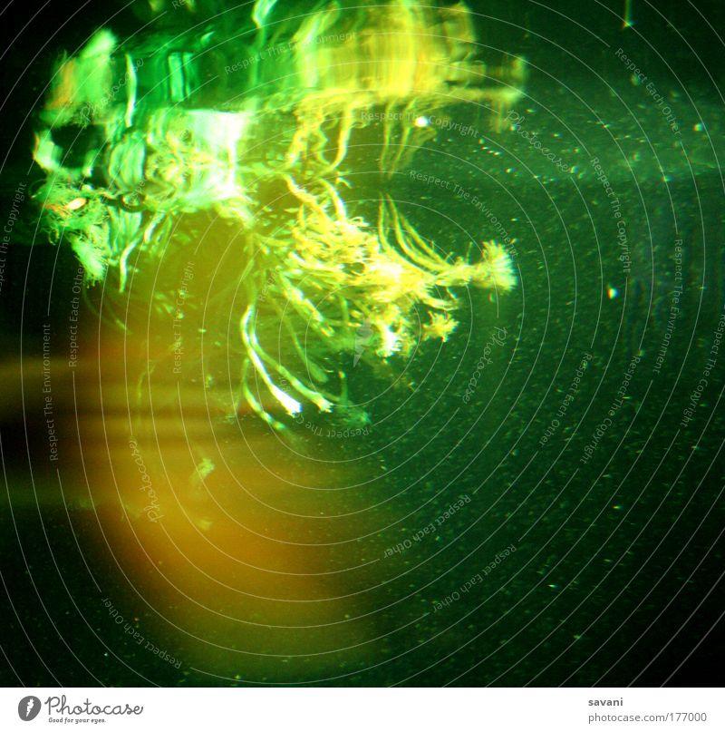 under water Erholung ruhig Angeln tauchen Natur Wasser Pflanze Grünpflanze Algen Unterwasserpflanze See Aquarium Surrealismus Umwelt Umweltschutz Farbfoto