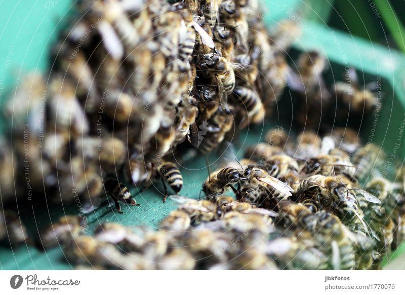 klangfarbe / das Summen der Bienen Natur Tier Freude Umwelt Glück Lebensmittel Zufriedenheit Ernährung Wildtier Fröhlichkeit Flügel Vorfreude Begeisterung