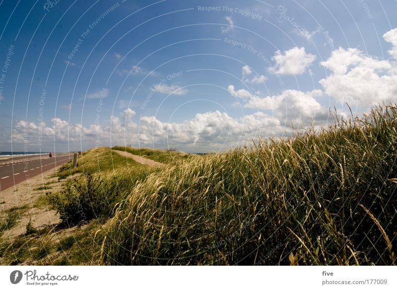 Abschied nehmen Natur Himmel Sonne Meer Pflanze Sommer Wolken Straße Gefühle Wege & Pfade Landschaft Stimmung Küste Trauer Sträucher Hügel