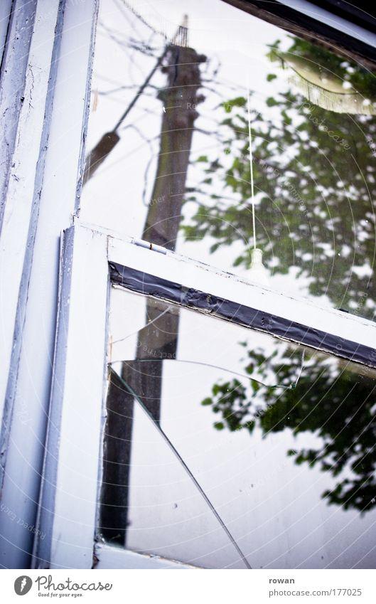 fenster alt Baum Blatt Haus kalt Fenster Glas kaputt Häusliches Leben Laterne gebrochen schäbig Vorhang altmodisch Glasscheibe