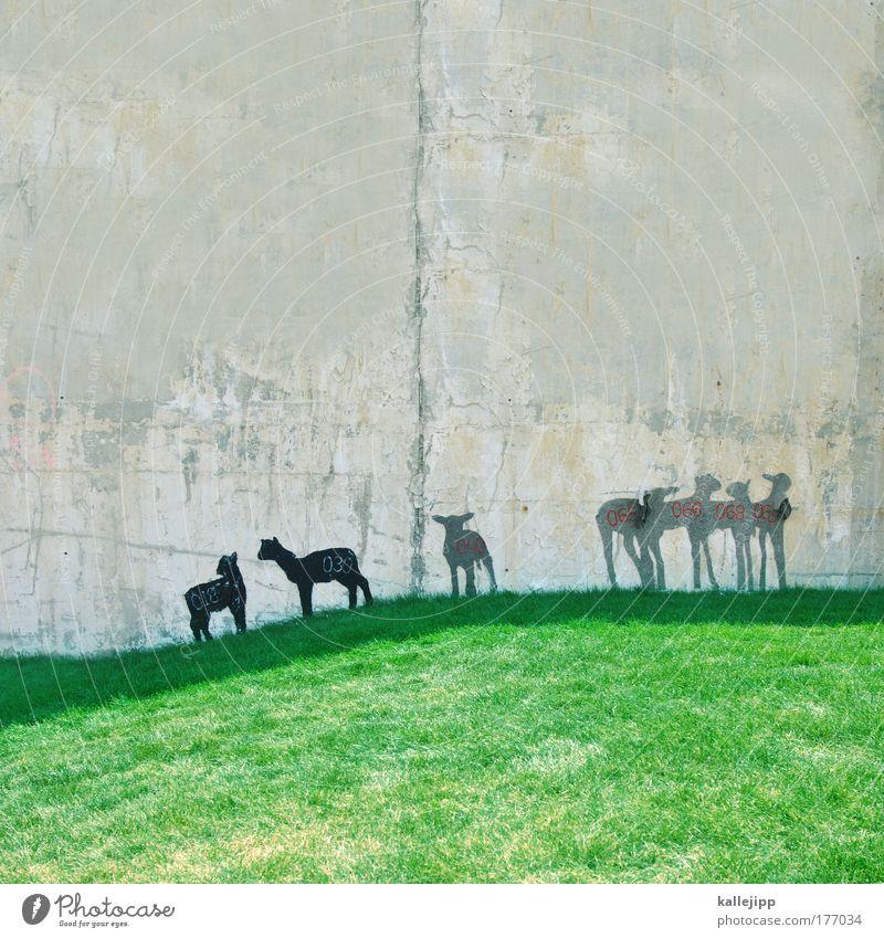 volkszählung Tier Tierjunges Wand Graffiti Wiese Mauer Beton Tiergruppe Kultur Ziffern & Zahlen Landwirtschaft Völker Team Zoo Schaf dumm