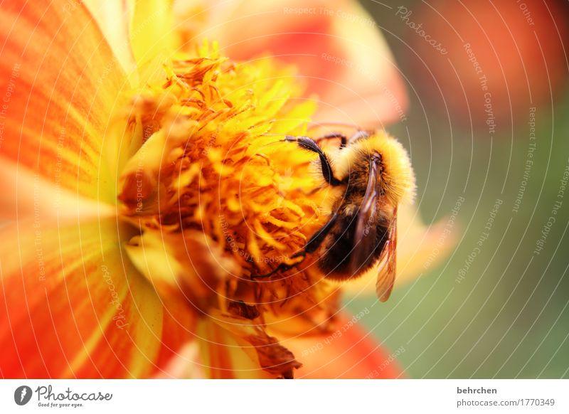 jedem anfang wohnt ein zauber inne... Natur Pflanze Sommer schön Blume Blatt Tier Blüte Wiese klein Garten fliegen orange Park Wachstum Wildtier