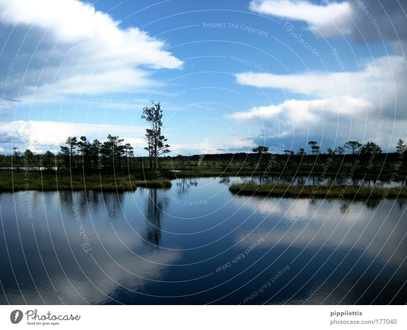 Spiegelbild Natur Wasser Himmel blau Pflanze ruhig Wolken Ferne Erholung Freiheit Glück träumen See Landschaft Luft Zufriedenheit