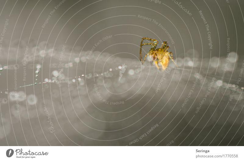 Abwartend-Spider im Netz Umwelt Natur Landschaft Pflanze Tier Sommer Garten Park Wiese Wald Wildtier Spinne Tiergesicht Krallen 1 Fressen glänzend Spinnennetz
