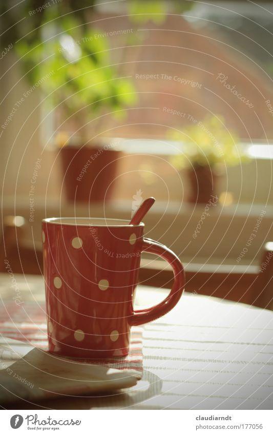 Pünktchenpause Pflanze rot ruhig Erholung Fenster Glück Zufriedenheit Wohnung Lebensmittel Tisch Getränk Kaffee Pause Küche trinken