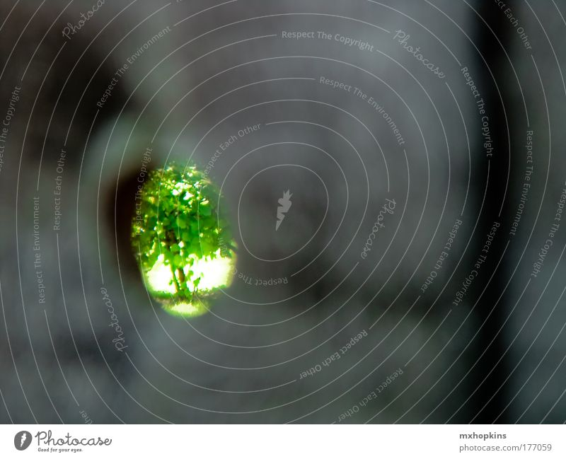 as you can see - i am green Natur schön Baum Sonne grün Pflanze Sommer Blatt schwarz Einsamkeit Ferne Wand Gefühle Frühling Holz grau