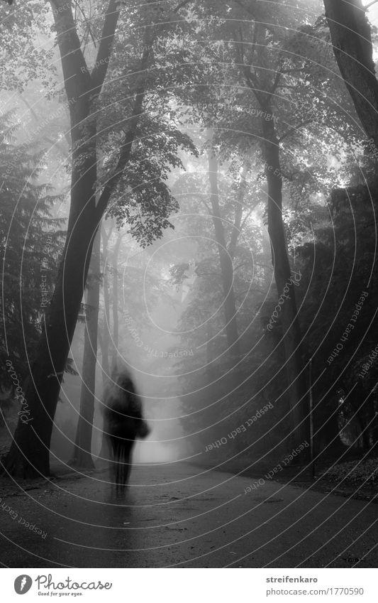 Die unscharfe Gestalt des Spaziergängers verschwindet im zwischen Bäumen im dichten Nebel im Herbst Mensch feminin Junge Frau 1 30-45 Jahre Erwachsene Baum Park