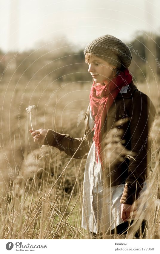 lebenszeichen feminin Junge Frau Jugendliche Kopf Gesicht 1 Mensch 18-30 Jahre Erwachsene Umwelt Natur Landschaft Pflanze Feld beobachten Blühend Denken