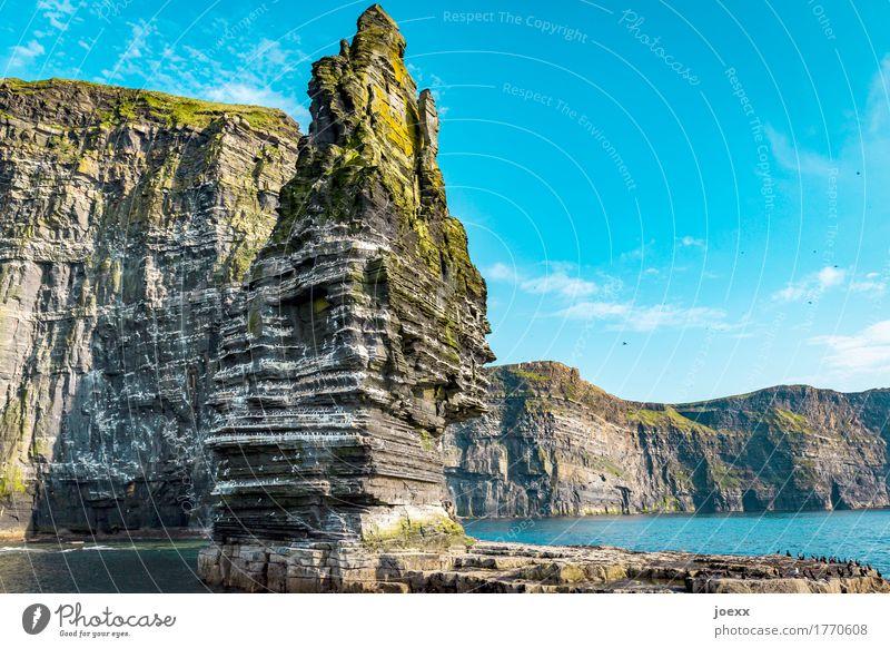 Branaunmore Natur Landschaft Himmel Schönes Wetter Felsen Berge u. Gebirge Cliffs of Moher Küste Meer Insel Republik Irland Klippe Vogel Schwarm gigantisch hoch