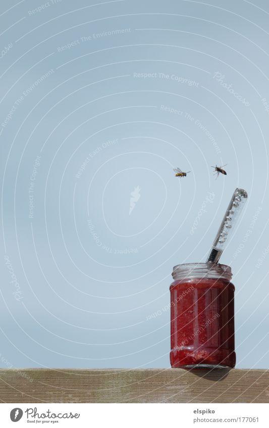 Ablenkungsmanöver Himmel blau Glas bedrohlich füttern Löffel stechen Wespen Marmelade Plage Marmeladenglas