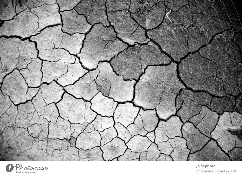 wenn die vögel aufgehört haben zu singen Natur Umwelt Wärme Erde Klima kaputt trist Boden bedrohlich trocken heiß Riss vertrocknet Klimawandel Durst Krise