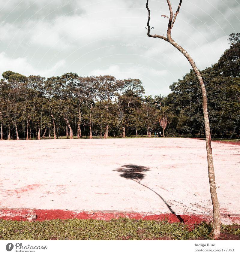 Natur schön Baum Sonne Pflanze Sommer Ferien & Urlaub & Reisen Wolken Wald Gras Park Sand Landschaft Luft Stimmung lustig