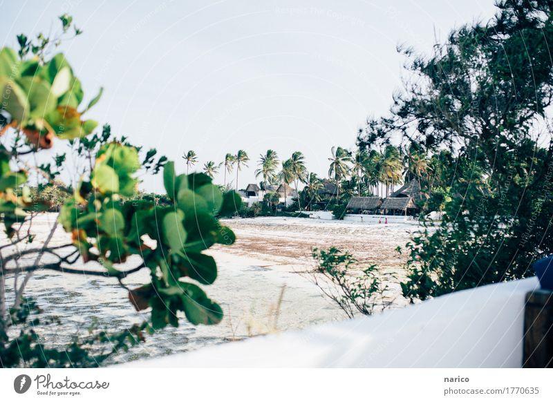 Zanzibar X Natur Landschaft Sand Wasser Sommer Schönes Wetter Sträucher Wildpflanze Palme Strand Meer Ferien & Urlaub & Reisen Afrika Tansania Sansibar Farbfoto