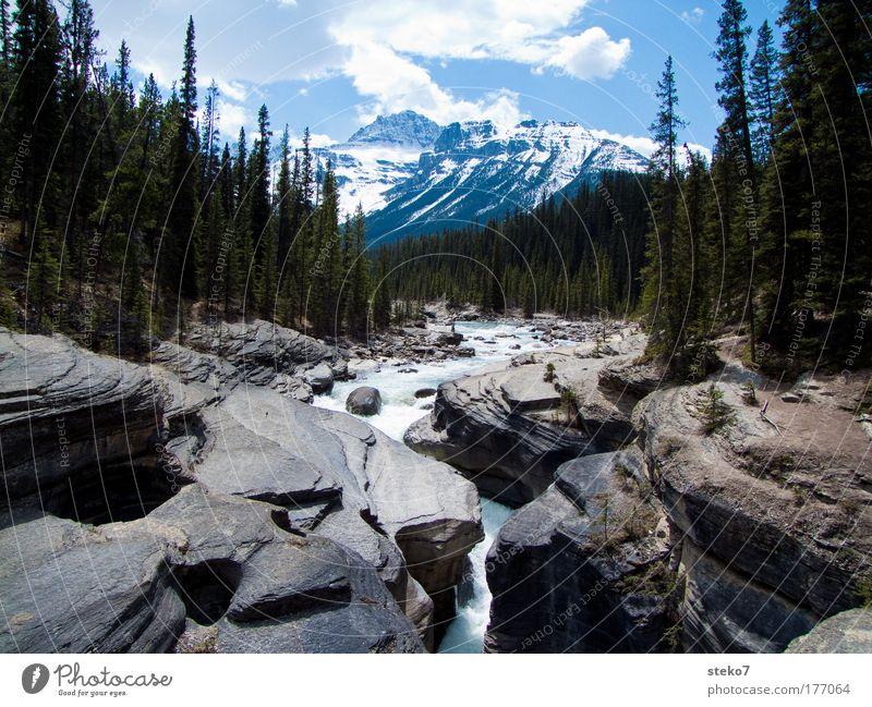 weichgespült Landschaft Sommer Schönes Wetter Wald Felsen Berge u. Gebirge Gipfel Schneebedeckte Gipfel Schlucht Fluss Einsamkeit Erholung Idylle Natur groß