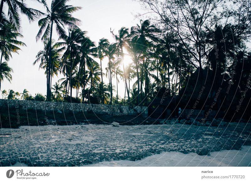 Zanzibar XII Natur schön Sonne Landschaft Haus Strand Umwelt Sand Horizont Warmherzigkeit Schönes Wetter Romantik Hoffnung Hütte Palme