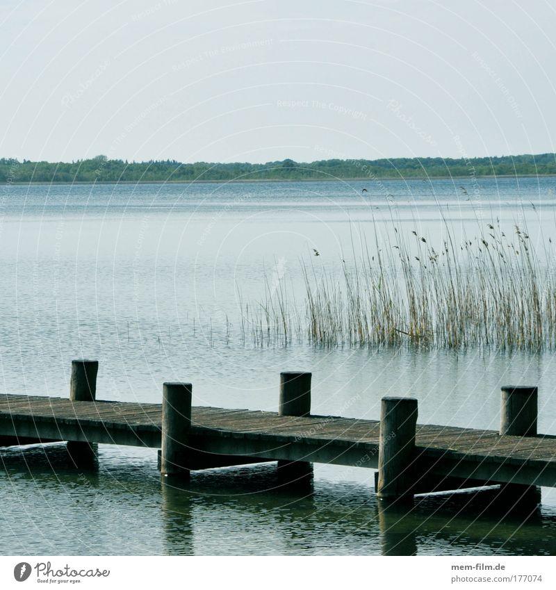 ruhe Wasser Ferien & Urlaub & Reisen ruhig Erholung See Frieden Stress Schilfrohr Steg Angeln Müritz