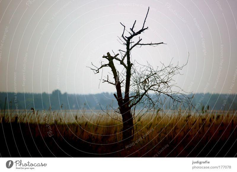 Baum am Bodden Natur Pflanze ruhig Einsamkeit dunkel Wiese Tod Gras See Landschaft Stimmung Küste Umwelt Wachstum Romantik