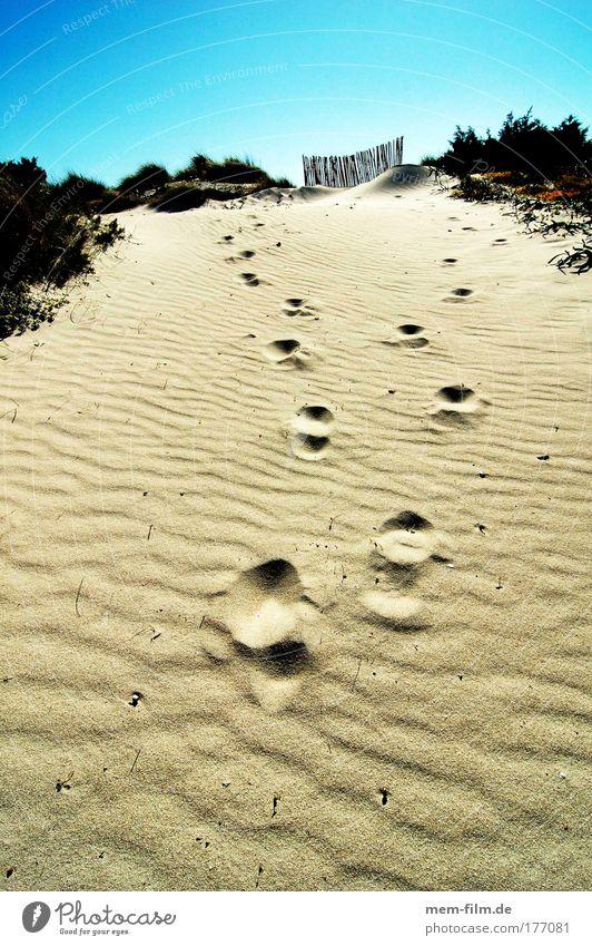 spuren es trenc Mallorca dühne Sand Ferien & Urlaub & Reisen Strand fußabdruck trocken Dürre heiß glühend transpirieren dehydrieren Sommer