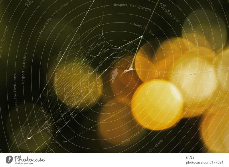 der goldene Faden Farbfoto Außenaufnahme Nahaufnahme Menschenleer Textfreiraum links Abend Dämmerung Schatten Kontrast Silhouette Reflexion & Spiegelung