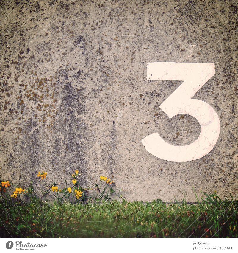 lithium Blume Gras Mauer Wand Ordnung 3 Ziffern & Zahlen Aufschrift Schriftzeichen Symbole & Metaphern Typographie Betonwand weiß gelb Blühend Reihenfolge