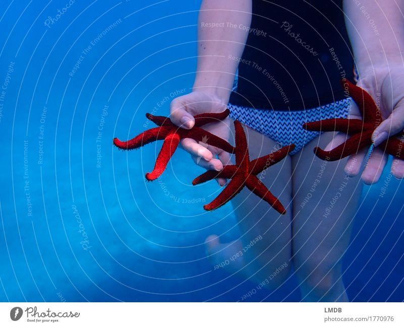 ***Sternensammler*** Schwimmen & Baden Strand Meer tauchen feminin Junge Frau Jugendliche Erwachsene Hand Beine 1 Mensch 18-30 Jahre 30-45 Jahre blau rot