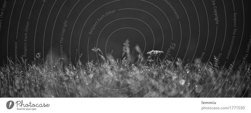 Schafgarbe Ausflug Natur Pflanze Erde Gras Wiese wandern schwarz weiß Frühlingsgefühle Romantik Halm Futter Weide Nahaufnahme Gewöhnliche Schafgarbe