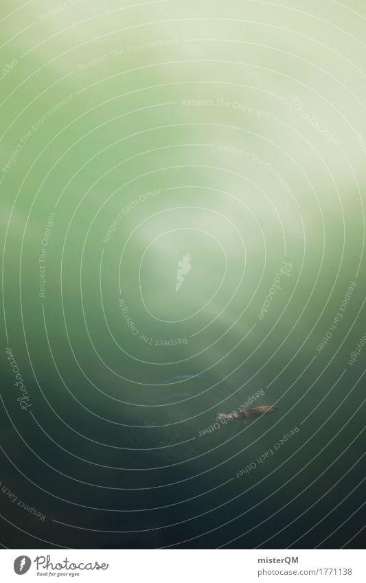 Bachforelle. Kunst ästhetisch See Fisch Fischereiwirtschaft Forelle Wasseroberfläche Fluss Küste Idylle Süßwasser Lebensraum trüb Farbfoto Außenaufnahme