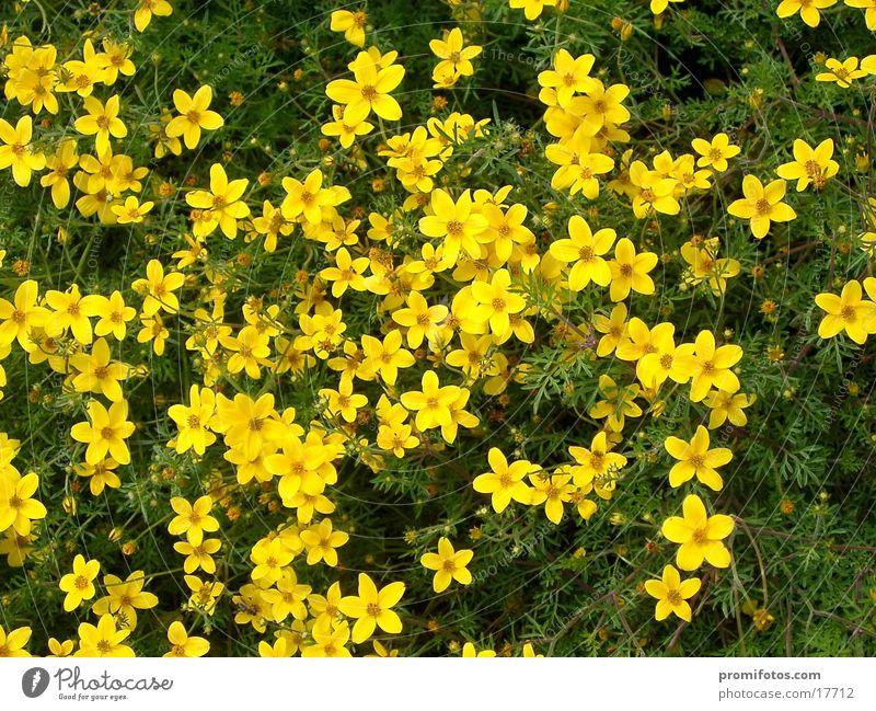 Blume2 Natur Blume grün