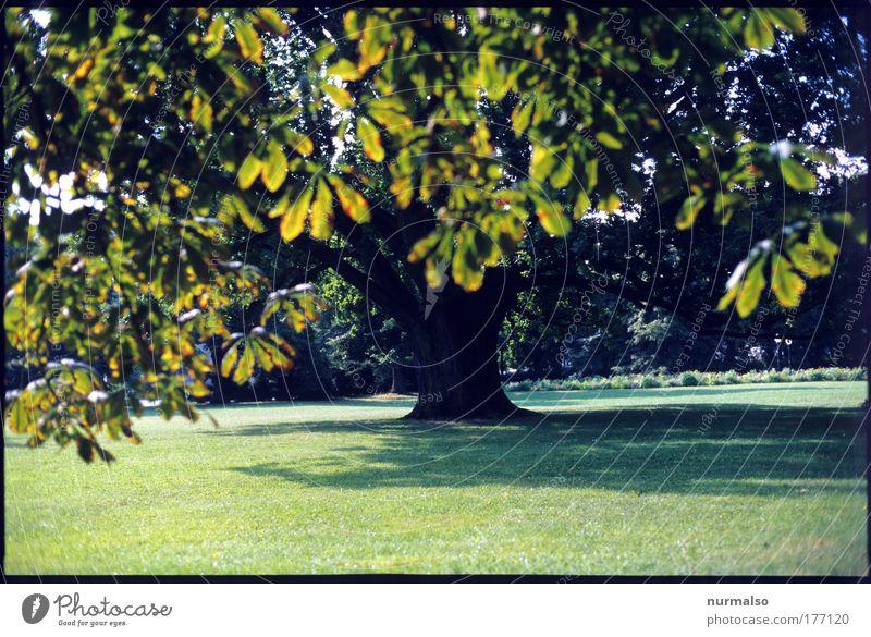 Frühherbst Natur Baum Pflanze Sonne Ferien & Urlaub & Reisen Sommer Blatt ruhig Wiese Umwelt Landschaft Spielen Freiheit Holz Gras Garten