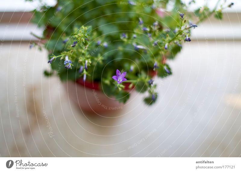 Einzelkämpfer Dekoration & Verzierung Blumentopf Fensterbrett Topfpflanze grün Wachstum Farbfoto Innenaufnahme Hintergrund neutral Schatten Unschärfe