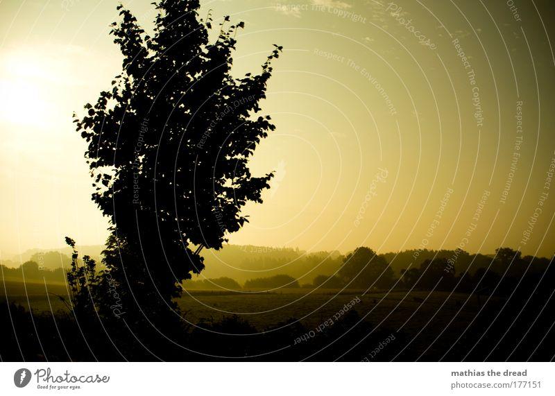 MORGENDLICHES NATURSCHAUSPIEL Farbfoto Außenaufnahme Menschenleer Hintergrund neutral Morgendämmerung Tag Licht Schatten Kontrast Silhouette Sonnenlicht