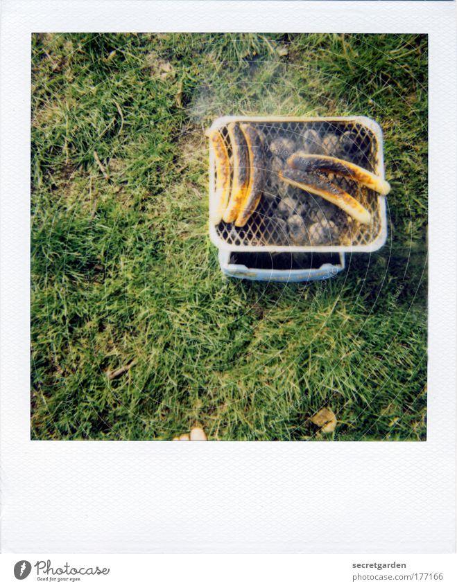 jetzt gehts um die wurst! Natur grün Sommer Umwelt Ernährung Wiese Lebensmittel Gras Garten braun Kochen & Garen & Backen Appetit & Hunger Grillen Camping lecker analog