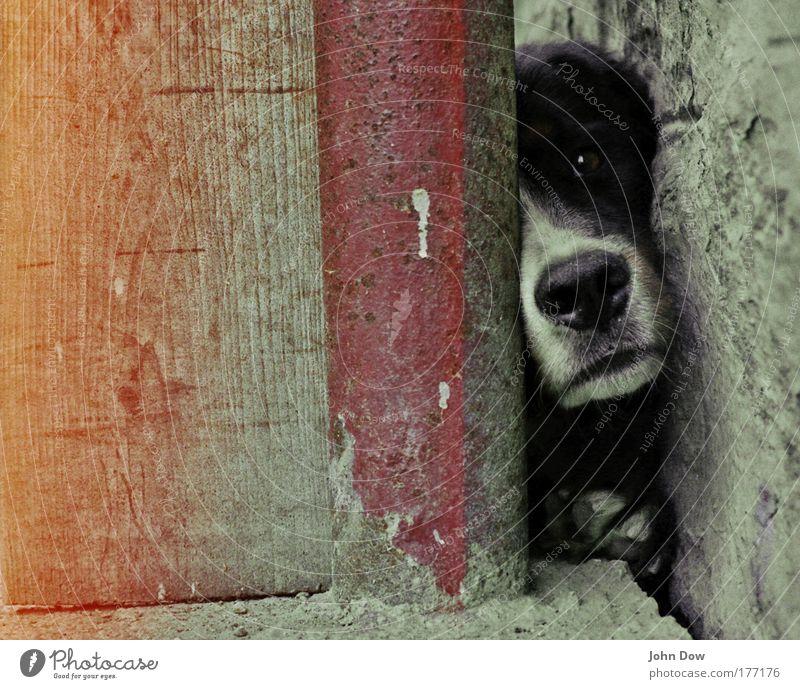 Frei Schnauze Tier Leben Wand Hund Mauer warten Kommunizieren Tiergesicht beobachten Dorf Neugier niedlich eng Wachsamkeit Geruch Umweltschutz