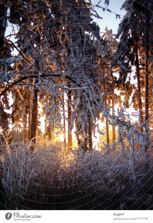 kleine Abkühlung gefällig? schön Winter Wald kalt Schnee Eis Stimmung frisch Frost Klarheit Erinnerung Anmut Raureif Schwäbische Alb