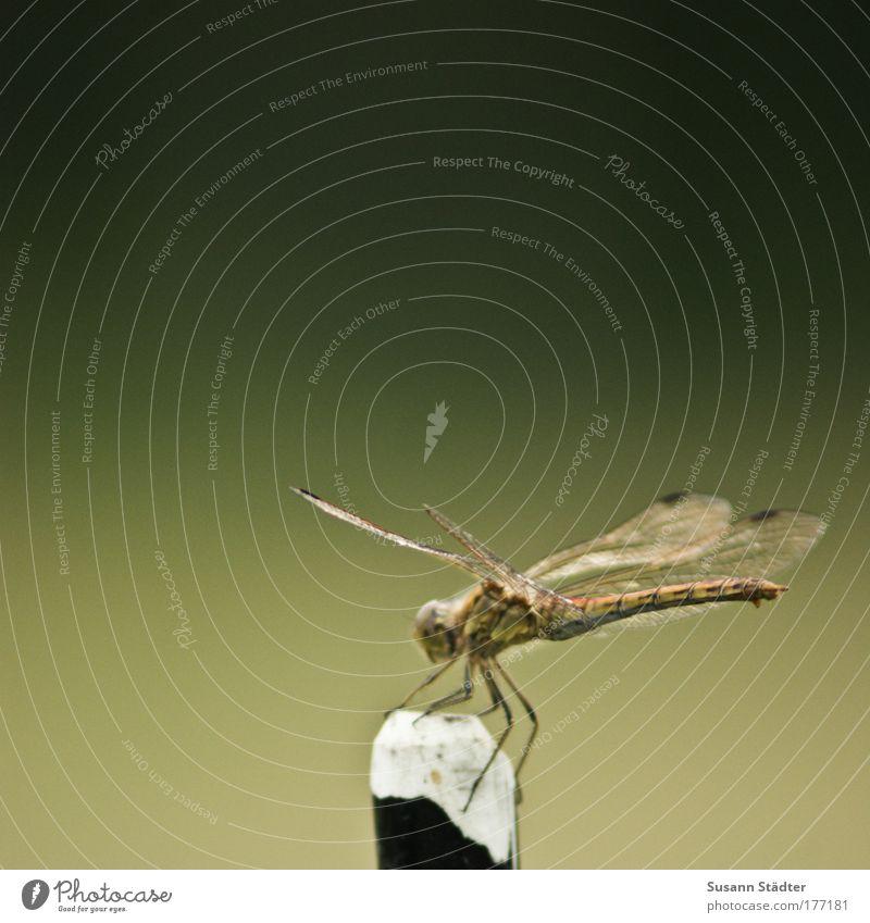 Punktlandung Tier Fliege Flügel Insekt beobachten Gipfel Segeln Anmut Berge u. Gebirge Pilot Libelle Schuppen Libellenflügel