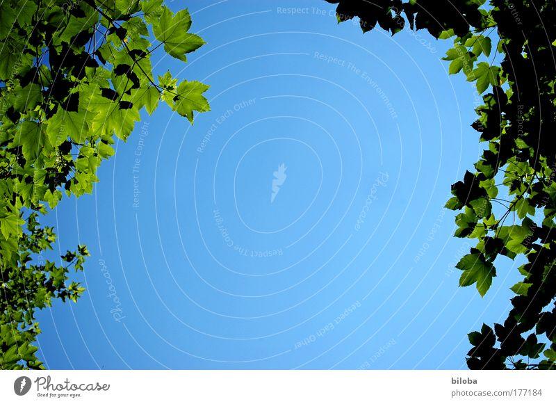 Sommerloch Himmel Natur blau grün Baum Pflanze Sommer Blatt Umwelt oben Luft Kunst Hintergrundbild elegant hoch Urelemente