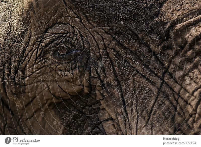magical elephant eye alt Tier Auge Traurigkeit träumen Kraft gehen ästhetisch authentisch Kultur Schutz Zoo stark Muster Respekt Weisheit