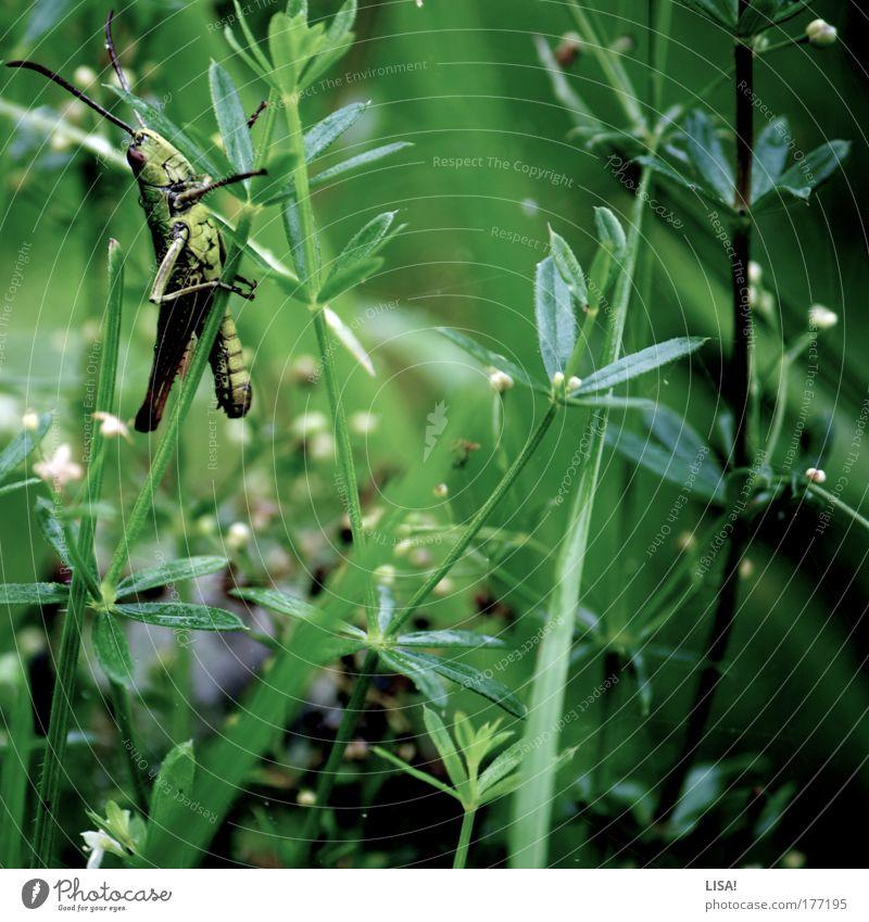 gras II Natur Pflanze Sommer Tier Wiese Blüte Gras Regen Landschaft Feld Wind Umwelt nass sitzen Flügel Insekt